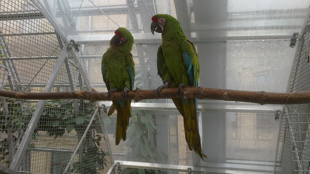 Image result for the best macaw species for winter